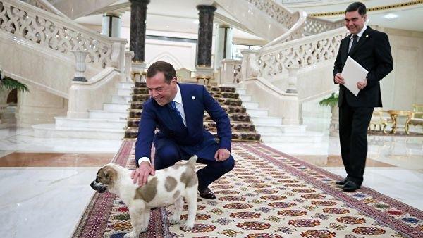 Даниелян: Собака Медведева – угроза нацбезопасности Армении