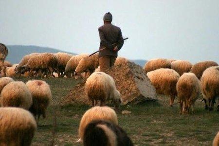 В Саатлы застрелили пастуха