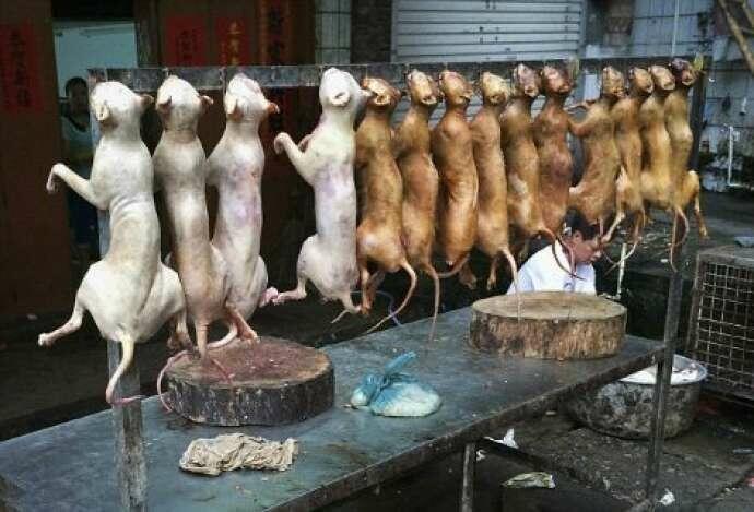 9 milyonun virusa yoluxmasına səbəb olan Çindən ŞOK ADDIM: itləri bişirdikdən sonra... - FOTO